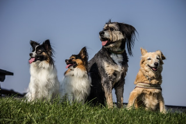 4 dogs
