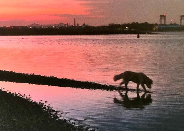 Olivia, 13.5 years, enjoying the sunset over Boston Harbor