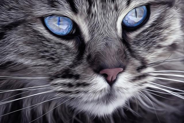 blue eye cat2